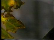 Vlcsnap-2016-04-17-10h46m38s59