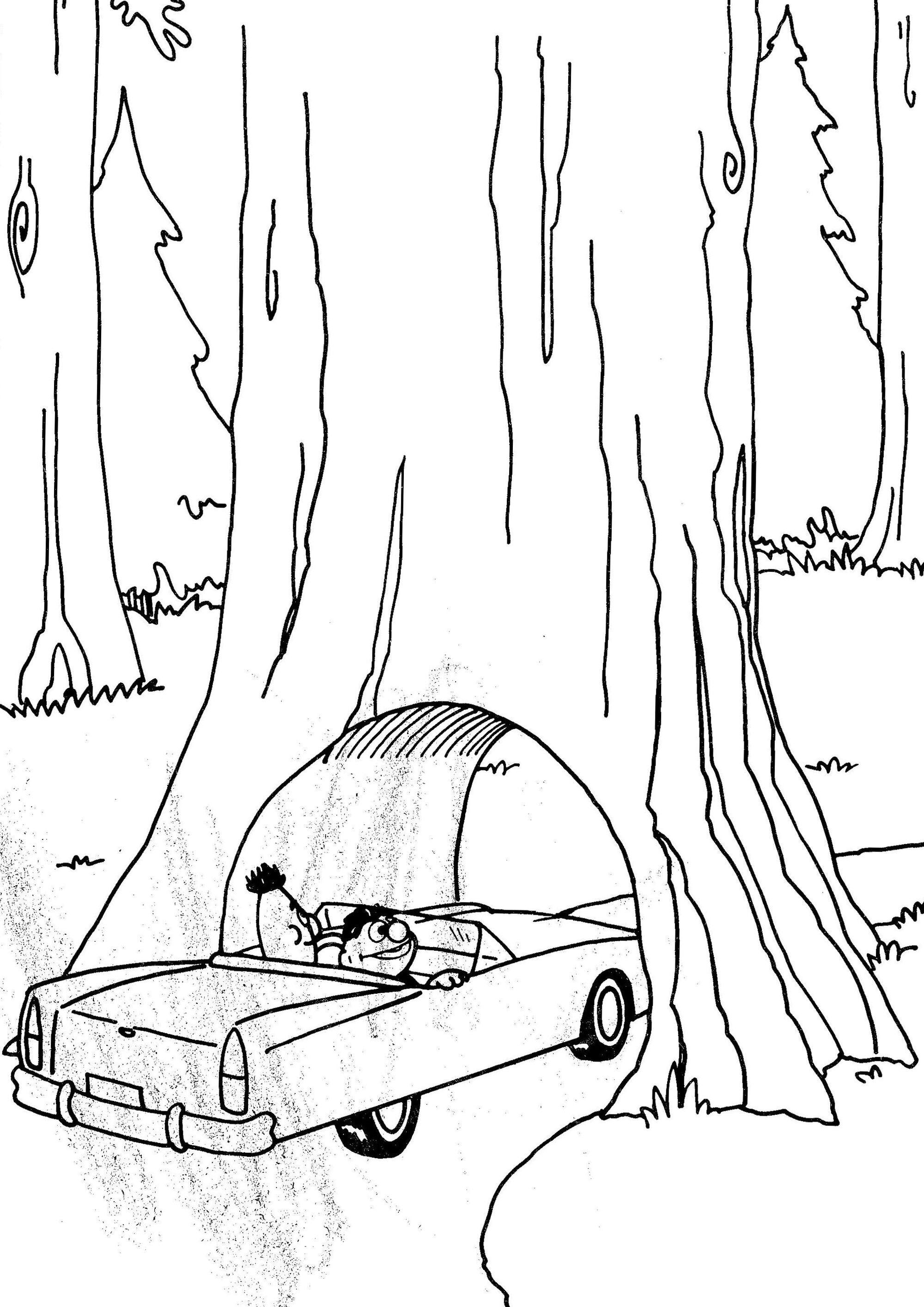 Redwood National Park Muppet