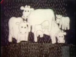 1272-Cows
