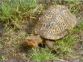 TurtleSong