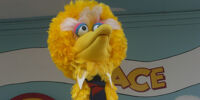Sesame Place Presidential Election