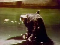 Animalsbathing