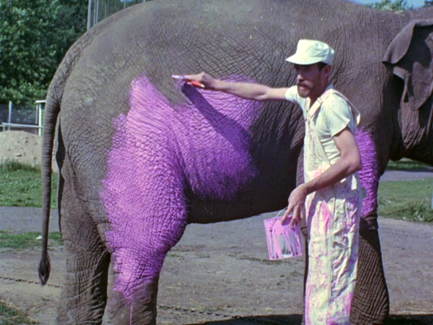 File:Pinkelephant.jpg