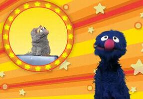 Grover-cat