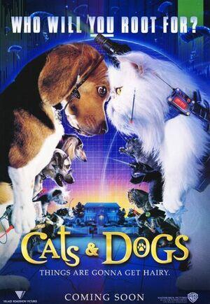 Catsanddogs