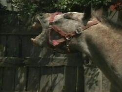 Horse-sound