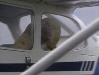 Matt plane