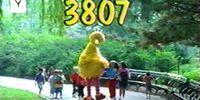 Episode 3807