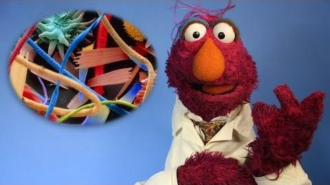 5 Hidden Worlds Revealed Under a Microscope (w Sesame Street) 5facts