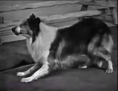 File:Rowlf lassie2a.JPG