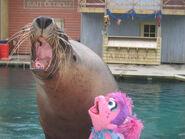 SeaWorldGoldCoastAbbyCadabby