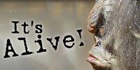 It's Alive! (exhibit)