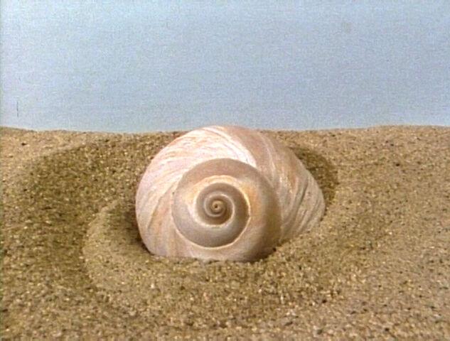 File:SnailShell.jpg