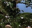 Billy Bunny's Family