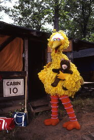 Big bird radar camping