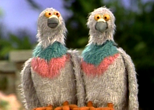 File:Pigeons.jpg