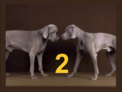 File:Dogs2.JPG