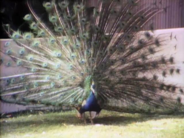 File:Animalswtails.jpg