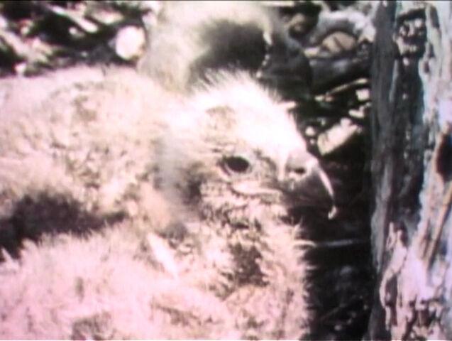 File:Film-BabyEagle.jpg