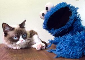 Cookie and Grouchy Cat