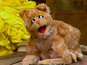 Simba the kitty-cat