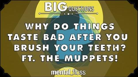 Why do things taste bad after you brush your teeth? - feat. The Muppets! - Big Questions - (Ep. 30)
