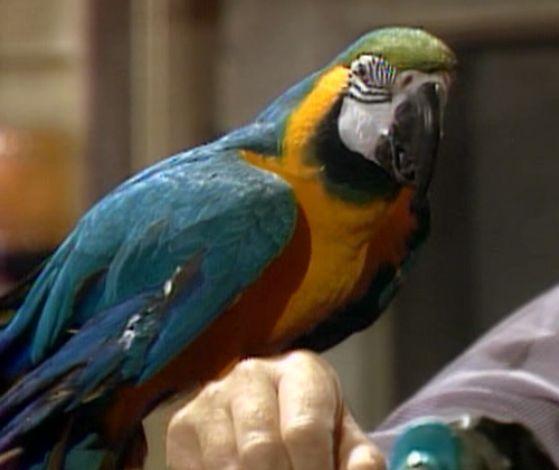 File:Macaw-fragglerock.jpg