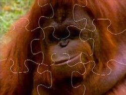 Orangutanpuzzle