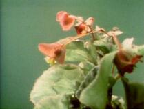 1448-Spring