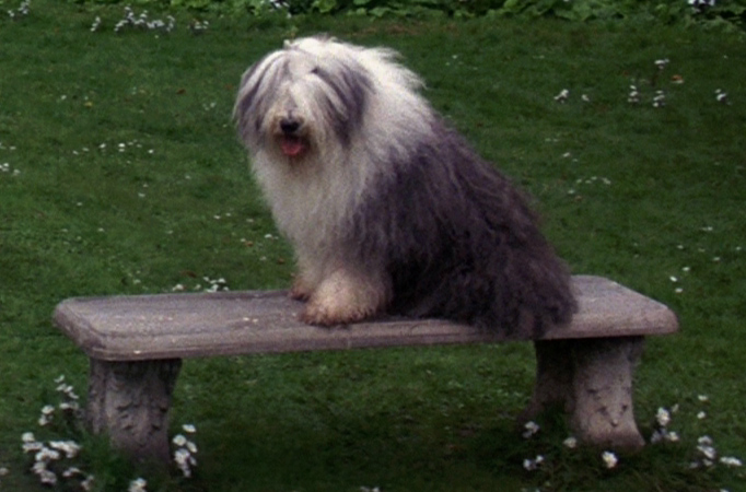 What Is The Name Of Sarah S Dog In Labyrinth
