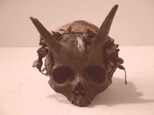 File:Horned Skull.png