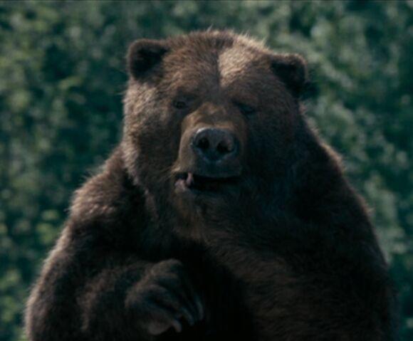 File:Bearsuckingpaw.jpg