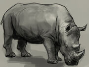 Rhino-drawing
