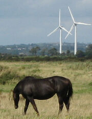 Wind-turbines-with-horse