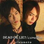 Dead or lie camellia