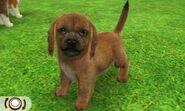 Beagle-odd1