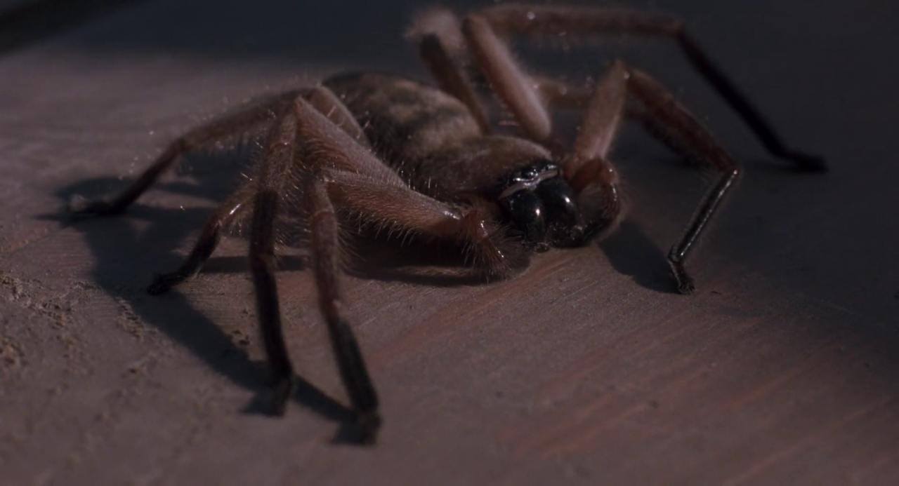 Spider Arachnophobia Non Alien Creatures Wiki Fandom
