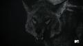 Werecoyote