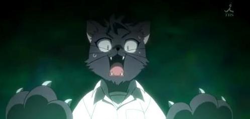 File:Junpei cat.jpg