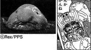 SBS66 5 Blobfish