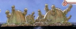 Остров Кактус