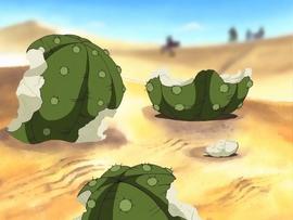 Mescal Cactus