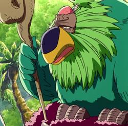 Bald Parrot Anime Infobox
