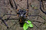 Cranaidae