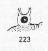 Cervibunus ornatus 2
