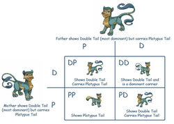 Punnet-square feline-double-tail
