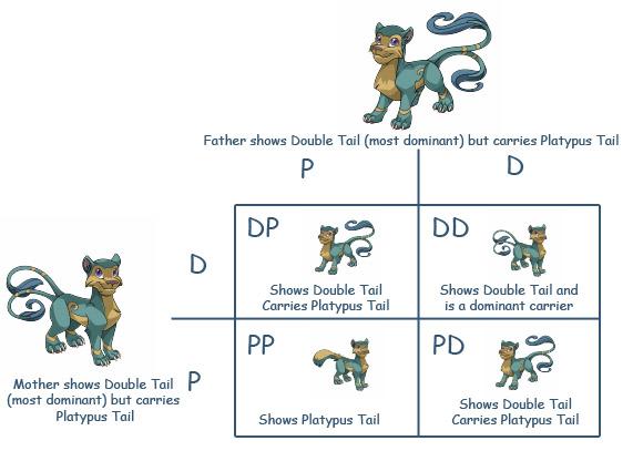File:Punnet-square feline-double-tail.jpg