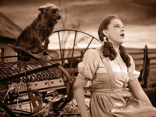 File:Judy-Garland-and-Toto-in-The-Wizard-of-Oz1.jpg