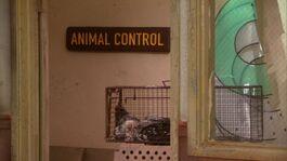 Animal Control