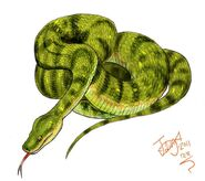 Bluff downs giant python